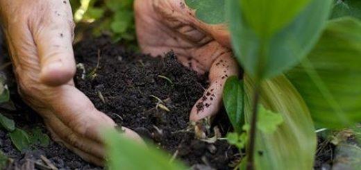 sol, matière organique