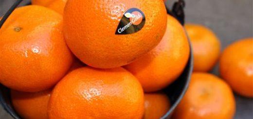 mandarine, Afourer, Nadorcott, Clemengold