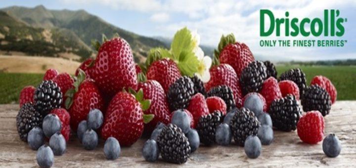 Driscoll's, Maroc, Portugal, Fruits rouges, myrtille, framboise fraise, mûre