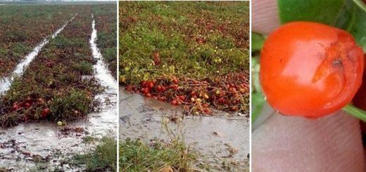innondations_italie.jpg