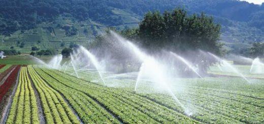 irrigation_eau.jpg