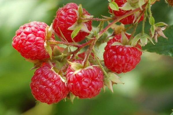 fruits rouges, Espagne, Andalousie, Fraise, Framboise, Myrtille, Mures