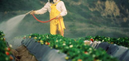 Europe, Pesticides, produits phytopharmaceutiques, réglementation, agriculture biologique