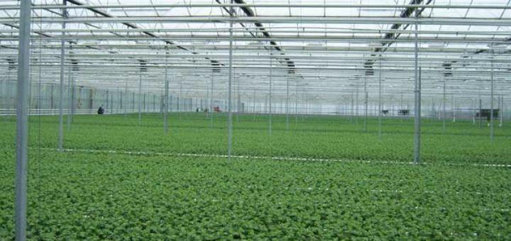Sous-serre, Horticulture, Technologie, Automatisation, Chauffage