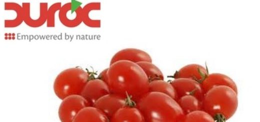 tomate Duroc