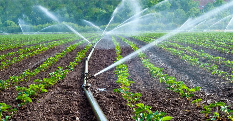 BAD, irrigation, PAPNEEI, PMV, Prêt