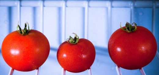 stockage tomate
