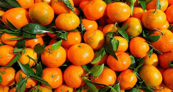 Une nouvelle saison des oranges gyptiennes commencent en for Portent fruit