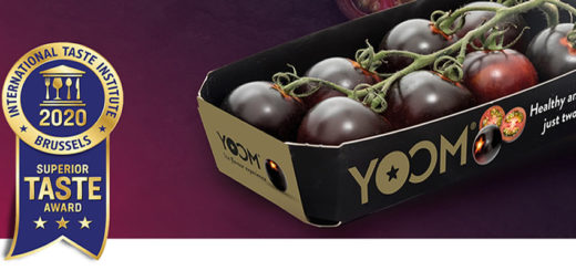 tomate Yoom